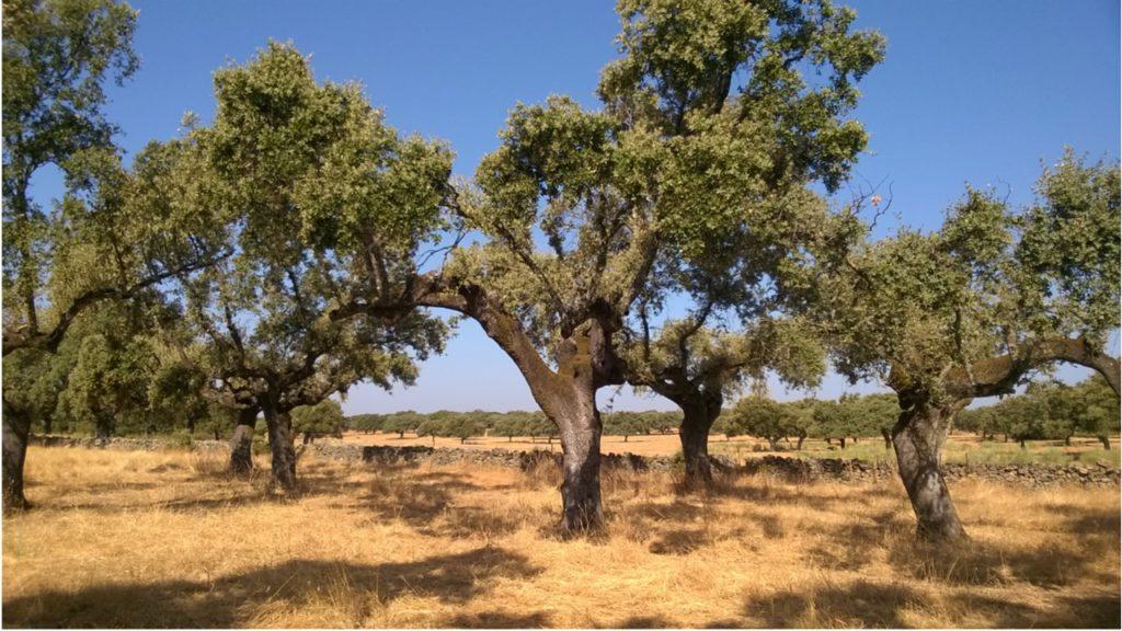 Spania Delice - Paysage d'Estrémadure en Espagne en plein été